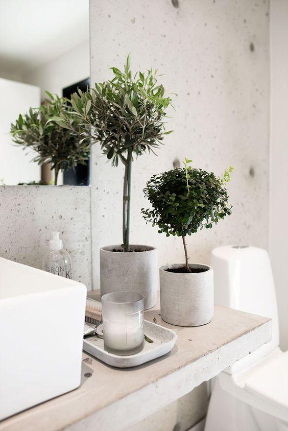 plantas-bano